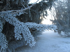 (myele) Tags: snow neige fros frimas {vision}:{outdoor}=0938 {vision}:{mountain}=0532