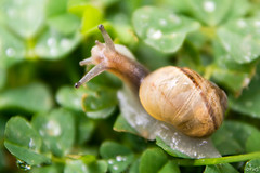 snail posing in the garden