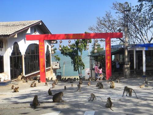 Monkey/Khao Takiab/Hua Hin