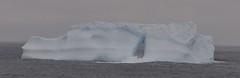 Greenland's Lonely Sailor (Insearchoflight) Tags: ice nature st naturallight lightandshadow johns icebergs seaice naturephotography newfoundlandandlabrador insearchoflight waynenorman titanicsnightmare readytocrack