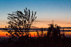 Sunset (Moretti Matteo) Tags: sunset shadow sky sun plant tree clouds tramonto ombra colori