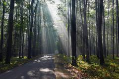 Magic sun rays (radimersky) Tags: magic sun rays magiczne promienie soca las forest wald morning poranek day dzie jesie autumn podzim droga lane local road poland europa europe landscape krajobraz dmclx100 panasonic lumix micro four thirds 43 niwki opolskie mist mgieka polska 3840x2560 light