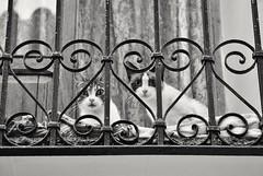 Qu miras? A ti. Y tu? (nataliaf.rouces) Tags: gatos cats balcon balcony finestrat calles street byn bw