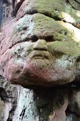 Dunino Den (stuant63) Tags: fife scotland face dunino den rock carving greenman