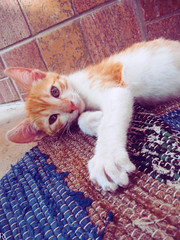 Cats Edition 8 - (27) (Robert Krstevski) Tags: robertkrstevskiblogspotcom robertkrstevski cat pet pets animal animals animallovers animalslove lovely filter filters color colors kitty kitten kittens kitties cute cuteness gato gatos popular macedonia catsedition8 lachatte chatte