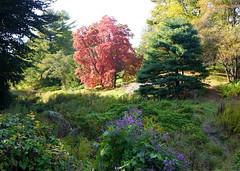 (elalex2009) Tags: arnoldarboretum botanicgarden fall fallcolors autumn autumncolors autumnleaves newengland massachusetts sonyalphanex7 sonynex7 trees tree landscape осень