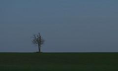 (Kelvin P. Coleman) Tags: canon powershot nottingham evening sky cloud cloudy dusk bluehour twilight farm farmland rural landscape field tree horizon minimalism green