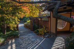 Brooklyn Botanic Garden 2016-11 (aloucha) Tags: autumn nikon nature botanicgarden brooklynbotanicgarden 2016 fall garden november urbannature nyc newyorkcity outdoors brooklyn d90 foliage newyork bbg bklyn japanese japanesegarden