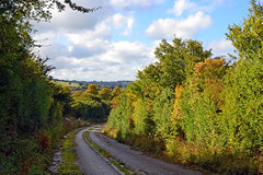 The old A47 on Wardley Hill (AndyorDij) Tags: wardleyhill a47 road hedgerow trees autumn england rutland uk unitedkingdom 2016