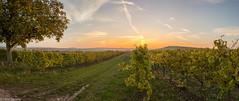 Herbstpanorama (fadenfloh) Tags: herbst fall autumn baum tree weinberg ngc