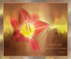 It is always the simple that produces the marvelous.(Amelia Barr) (boeckli) Tags: flowers ameliabarr poetography simple einfach blumen blüten bloom blossom blossoms blooms red coloured bunt lilies lilien tóta þórunnþorsteinsdóttir textures texturen painterly photoborder bright flower plant pflanze serene petal pastel pastell pflanzen