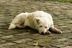 IMG_20161015_145758_740 (Carmen Claudia Cornea) Tags: dog caine