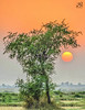 Sunset. (Furqan Faiz) Tags: nikon tamron random sun sunset tree down under green nature pak beautiful