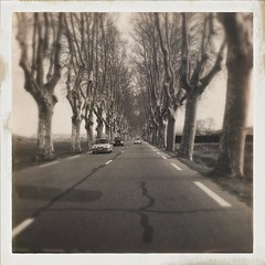 On the road (CTfoto2013) Tags: peyrollesenprovence extrieur outdoor perspective depthoffiled dof mouvement movement automobiles voitures cars monochrome vintage retro sepia bouchesdurhne paca france alle platanes paysage iphone hipstamatic landscape road route