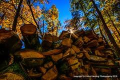 A Cord Of Oak (T i s d a l e) Tags: tisdale acordofoak farm november fall autumn easternnc 2016