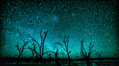 Australian Nocturne (Young Ko) Tags: nature nikon flickr landscape amazing awesome atmosphere sky composition reflection interesting longexposure trees night nightsky milkyway stars galaxy astrophotograph lightcrafter milkywayphotography australiannocturne australia nocturne