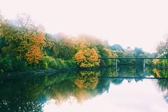 Slottsparken (sofjet) Tags: nature fall autumn skandinavien scandinavia urbannature park slottsparken schweden sverige sweden skne malmo malm