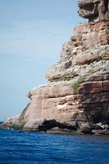 Gaspesie Perce Ile Bonaventure (cbaarch) Tags: quebec perce gaspesie ilebonaventure gannets