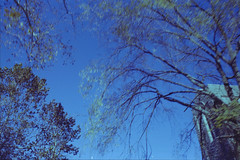 some trees yo (koreyjackson) Tags: lomo lomography film 35mm minolta x700 washington dc thank you gallery norfolk