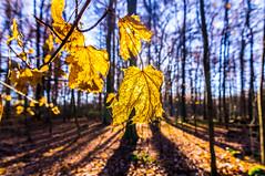 _DSC0028 (Mehmet Sağlam) Tags: tokina1116mmf28 autumn fall winter nature natural composition colors colours ultrawideangle 11mm light sonyalphaslta37 germany hessen