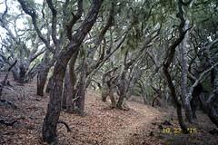 (josh,) Tags: 35mm film kodakgold400 montanadeorostatepark sanluisobispo landscape trees
