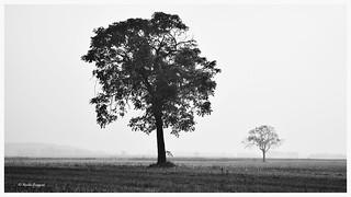 Trees, fog and peace © Nicola Roggero