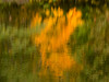 Fall reflection #2 (billd_48) Tags: ohio fall smp nature trees water refelections color