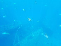 Election aside, today I took my phone snorkeling and got some pretty cool shots of a WWII-era shipwreck. They turned out super nice. Look at all them fish! 🐟 🐟 🐟