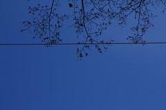 als die ersten Strahlen des Lichts ber die Huser gewandert waren, begannen die Bltter Feuer zu fangen (raumoberbayern) Tags: munich mnchen urbanfragments robbbilder abstract blau blue sky light licht tree baum fall herbst laub