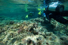 (Marco Carnovale) Tags: diver afsnikkor1735mmf28difed