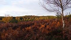 Fort Domaniale de Rambouillet - Saint-Lger-en-Yvelines - Yvelines - le-de-France - France (vanaspati1) Tags: fort domaniale de rambouillet saintlgerenyvelines yvelines ledefrance france vanaspati1 arbres trees vegetation couleurs automne lumire light paysage
