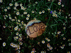 Love (heather's higher purpose) Tags: love inspire nature flora flower outdoor