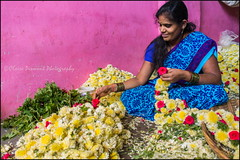 Garland.  Bangalore (Claire Pismont) Tags: asia asie inde india indedusud karnataka bangalore pismont clairepismont sari flowers garland puja woman rose yellow documentory colorful couleur color colour travel travelphotography