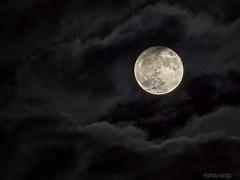 La estrella de esta noche (Nando Verd) Tags: luna super superluna nubes brillo crater detalle textura noche ciudad 14 catorce noviembre november 2016 moon nocturna elda petrer alicante gris llena plena redonda circulo circular blanca satelite tierra cuerpo celeste sistema solar lobo cielo
