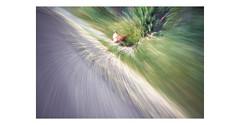 L a H u i d a (creonte05) Tags: explore eduardomiranda 2016 nikon d7100 chile campo color blurred nature flickr animales texture blure animals