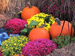 Autumn Delights (Cher12861 (Cheryl Kelly on ipernity)) Tags: mortonarboretum lisleillinois harvest fall autumn display pumpkins mums ornamentalcabbage colorful pink orange blue yellow hay flowers chrysanthemums