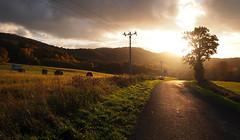 Natur13 (s-h-design) Tags: sky herbst fall sunset gegenlicht warm road valley field grass tree stroh heu gras tal hgel light evening hilly landscape power stromleitung wire
