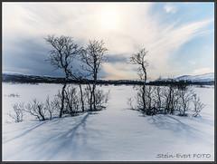 P4300127-1300 (Stnevert) Tags: winterlandscape winterwonderland winter snow canonshots canongallery norwegianlandscapes