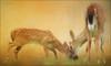 sharing is caring. (evelyng23) Tags: 207 interestingness explore i500 infestation screwworm newworldscrewworm keydeer deer fawn buck youngbuck family sharingiscaring endangered recovery bigpinekey floridakeys islands florida keydeernationalwildliferefuge topaz impressions lenseffects textures jai 2016 evelyng23 sigma pentaxk3 aficionados wildlife nature animal usa