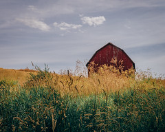 Pastures Of Plenty (Pedalhead'71) Tags: manning washington palouse barn wheat