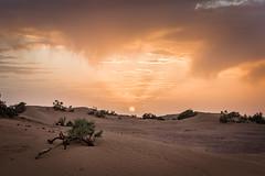 Sahara (Mopple Labalaine) Tags: soussmassadraa morocco sahara desert marokko maroc sand sun sunset tree mhamid draa