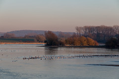 Across the shallows (Mibby23) Tags: wilstone reservoir water birds trees canon 70d 1585mm