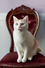 cat (428sr) Tags: neko