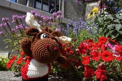 DSC00474 (The Crochet Crowd) Tags: crochetmoose amigurumi moose crochet doll alaska britishcolumbia thecrochetcrowd michaelsellick jeannesteinhilber danielzondervan crochetcruise mooseontheloose