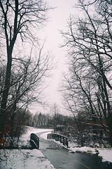 Cleary Lake (Liz Nemmers) Tags: nature minnesota nikon nikond3100 snow winter december creek lake water landscape mn onlyinmn exploreminnesota path bridge white reflection puddle trees branches