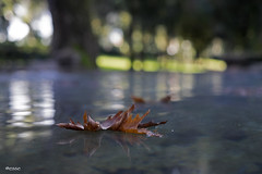 l'antitesi di un clich (_esse_) Tags: foglia leaf floating autunno autumn acqua water still immobile leggerezza lightness lgret clich opposite colfreddochefa passaunsecondounaltrosecondounterzosecondotresecondipersolonostriws