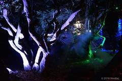 DSC04186 (Twareg) Tags: 2016 aboretum bpw enchanted forest westonbirt bathphotowalk gloucestershire england