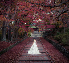 Fall In Love (Jiratto) Tags: aged ancient antique architecture autumn building fall japan kyoto old people street structure temple travel vintage kytoshi kytofu jp