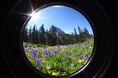 Roots 2 (Billy McHugh) Tags: vacation usa fish eye nature america photography montana natural hiking north scenic roadtrip glacier fisheye crosscountry glaciernationalpark