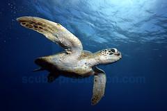 2012 12 METTRA OCEAN INDIEN 5465